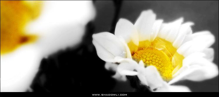 http://www.shadowli.com/images/Black-and-White.jpg