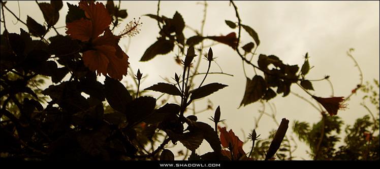 http://www.shadowli.com/images/Spring-Flowers.jpg