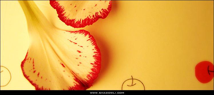 http://www.shadowli.com/images/carnation.jpg