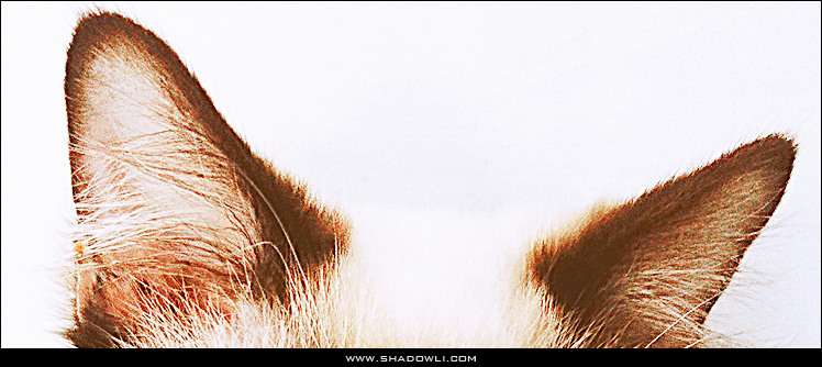 http://www.shadowli.com/images/cat.jpg