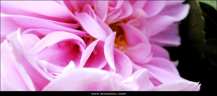 http://www.shadowli.com/images/flower.jpg