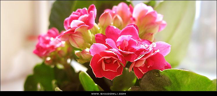 http://www.shadowli.com/images/flowerbj.jpg