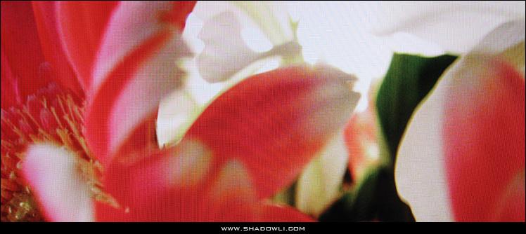 http://www.shadowli.com/images/gerbera.jpg