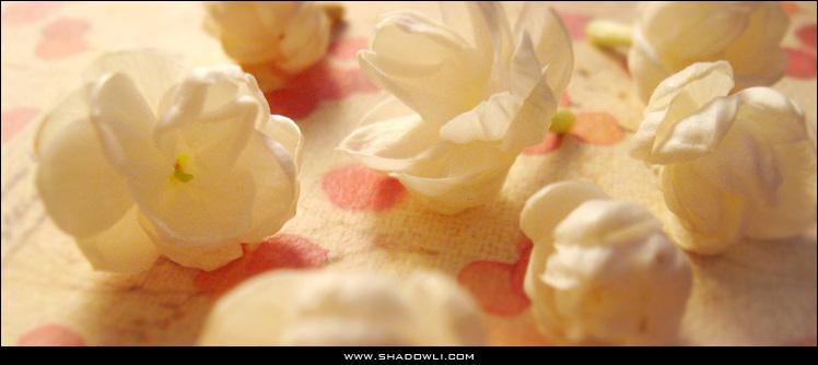 http://www.shadowli.com/images/jasmineflower.jpg