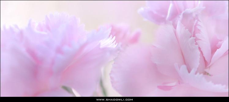 http://www.shadowli.com/images/pink0.jpg