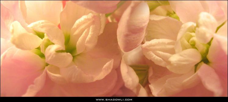 http://www.shadowli.com/images/pinkflower.jpg