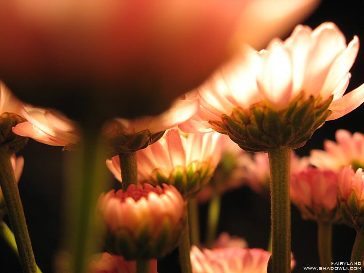 http://www.shadowli.com/images/the-power-of-light-01.jpg