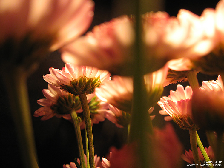 http://www.shadowli.com/images/the-power-of-light-02.jpg