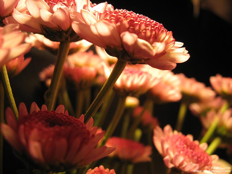 http://www.shadowli.com/images/the-power-of-light-07.jpg