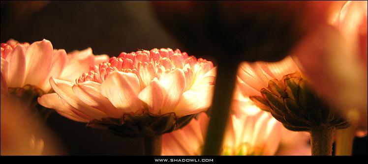 http://www.shadowli.com/images/the-power-of-light.jpg