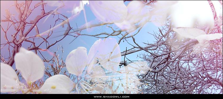 http://www.shadowli.com/images/whitesnow.jpg
