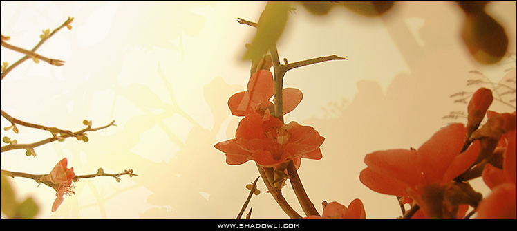 http://www.shadowli.com/images/wintersweet.jpg