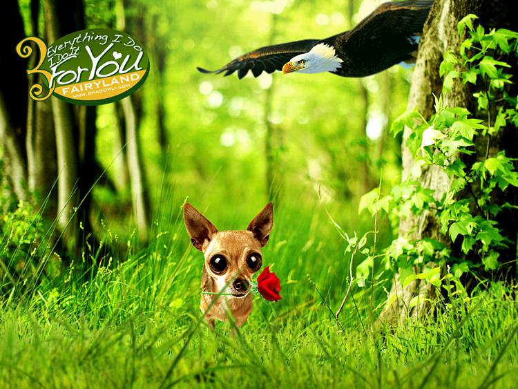 http://www.shadowli.com/images/y03.jpg