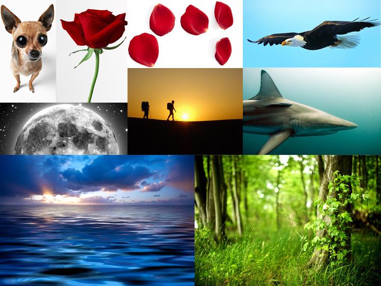http://www.shadowli.com/images/y05.jpg